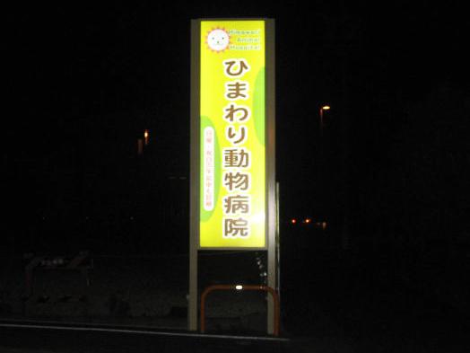 himawari_3
